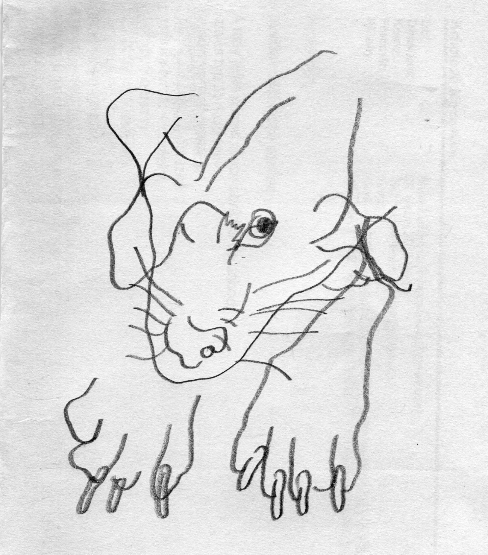 Anna Kulickova Blind Drawings Slepokresby